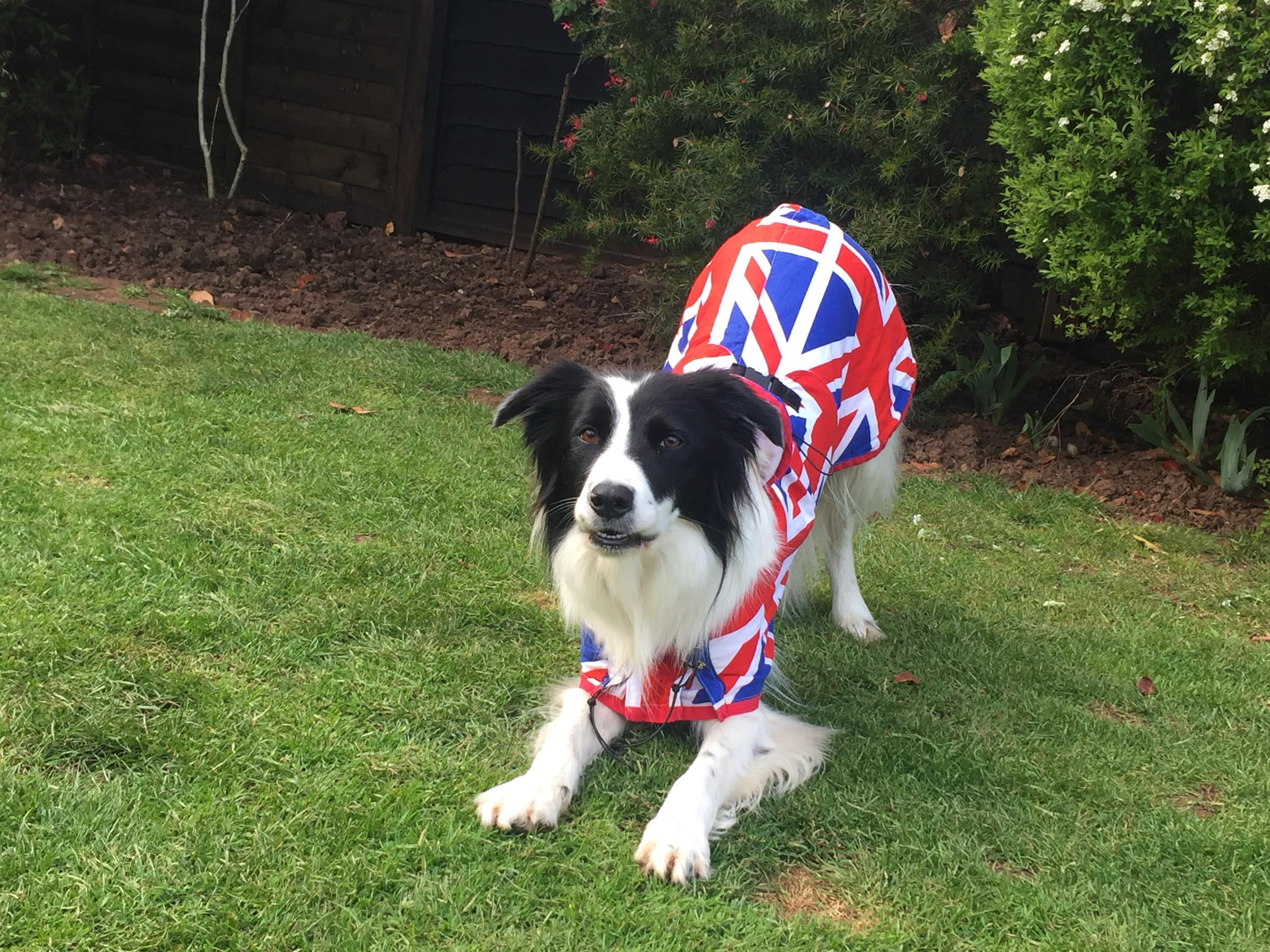Team GB Agility Dog